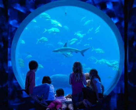 Atlantis The Palm Atlantis Kids Club