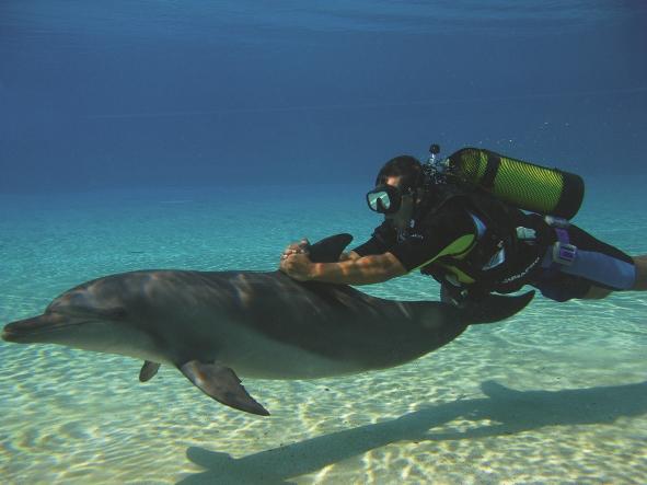 Scuba Dolphin (2)