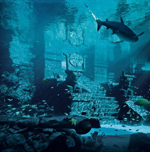 Atlantis the Palm shark tank