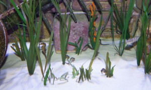 Sea horses in the The Lost Chambers Aquarium