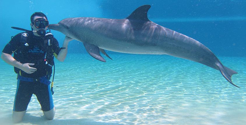 Atlantis - Scuba dive with dolphins