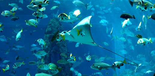 Atlantis Ultimate Snorkel
