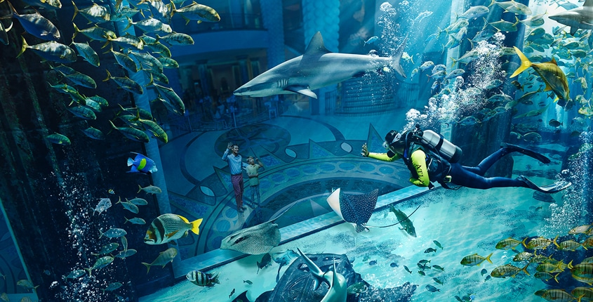 Jump Into Our New Diving Experiences