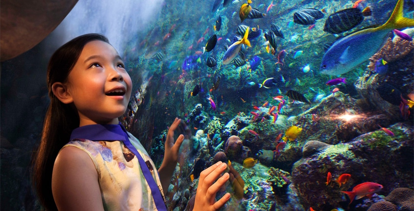 Discover All the Family-friendly Features of Atlantis Dubai This Festive Season