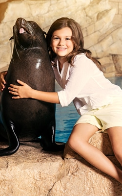 Discover More About the Charming Residents of Sea Lion Point