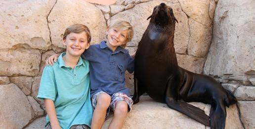 Sea Lion Photo Fun - Atlantis the palm Dubai