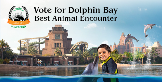 Vote for Dolphin Bay Best Animal Encounter