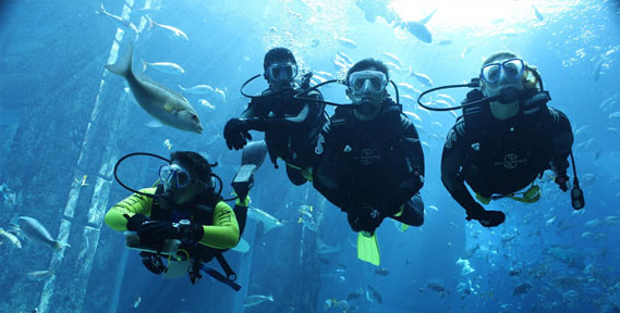 New PADI Scuba Dive Course and Dives on Offer at Atlantis, The Palm