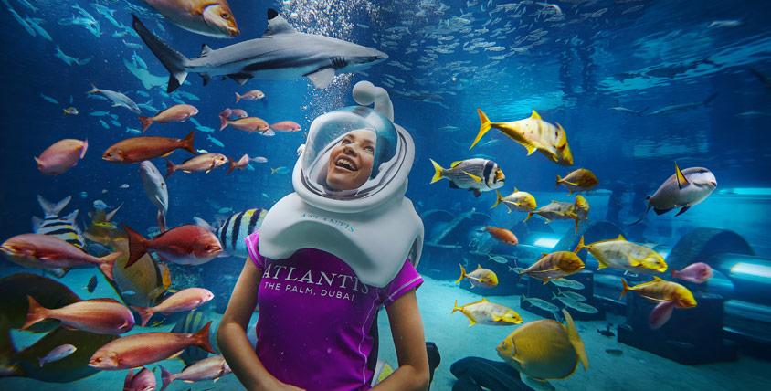 Dubai shark week при покупке квартиры в германии