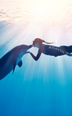 Take Advantage of the Dolphin Bay Booking Benefits at Atlantis, The Palm