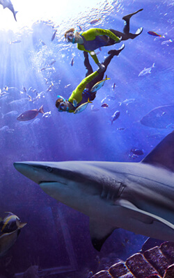 Gear Up For This Year's Most Adventurous Underwater Experiences During Atlantis Shark Week
