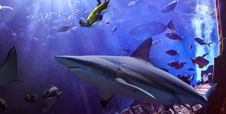 Dive into Summer with Dolphin Bay Splash Sale at Atlantis, The Palm