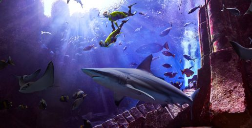 atlantis-shark-week-in-dubai