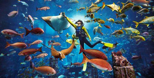 diving-in-ambassador-lagoon