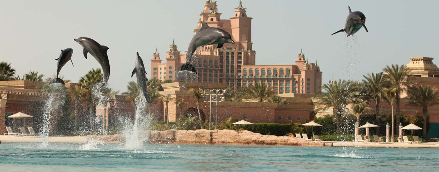 Top Facts About Dolphin Bay & Sea Lion Point in Atlantis, The Palm
