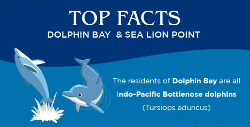top-facts-dolphin-bay-and-sea-lion-point-atlantis-dubai