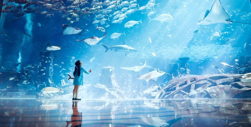 Experience a World Away from Your Everyday at Atlantis Dubai!