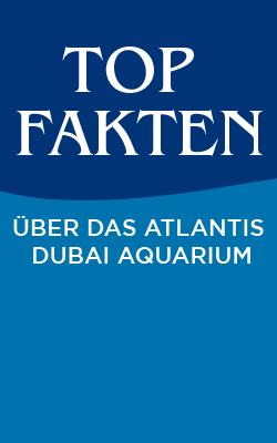Top Fakten über das Atlantis Dubai Aquarium