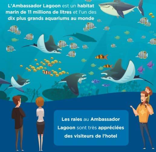 Les-raies-de-l-ambassador-lagoon