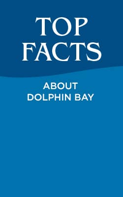 Top Facts About Dolphin Bay at Atlantis, The Palm