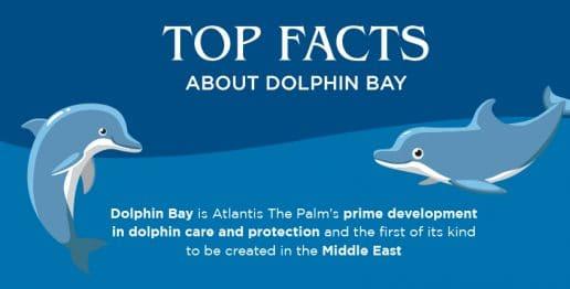 atlantis-dolphin-bay-top-facts