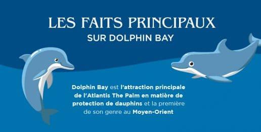 Site officiel de palm bay. Marier ou connecter 2 Rencontre dbsk sur la terre vostfr 2.