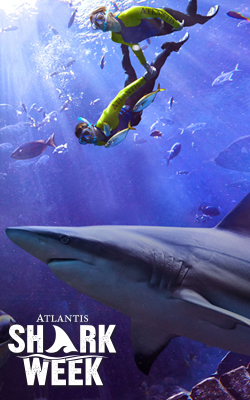 Dive into Atlantis' FIN-tastic Celebrations for Shark Week's 31st Anniversary!