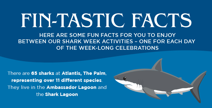 6 'Fin'tastic Facts About Atlantis Sharks