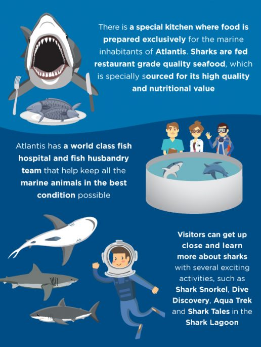 shark-week-activities-atlantis-dubai