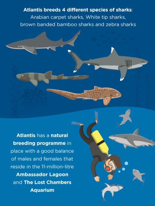 shark-week-at-atlantis-dubai