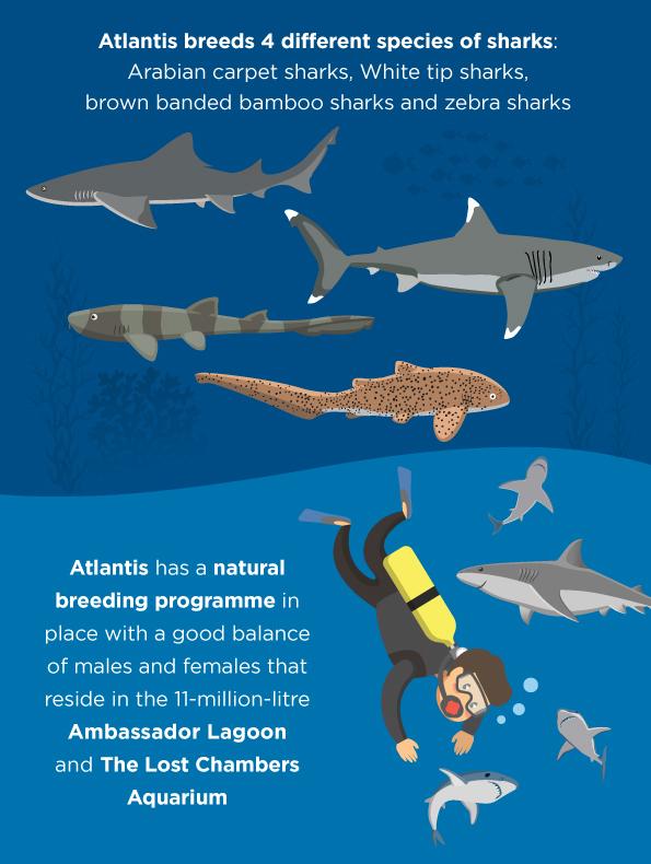 Dubai shark week дом на юге испании купить