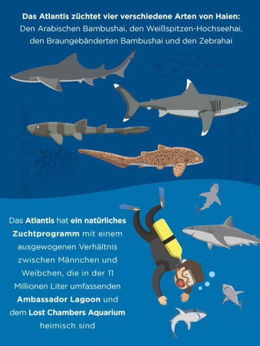 shark-week-fakten-über-die-aie-im-atlantis