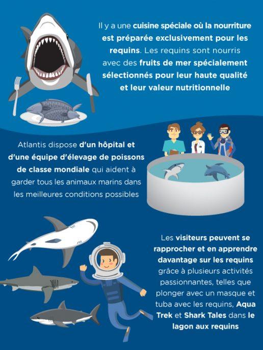 cuisine speciale pour les requins atlantis