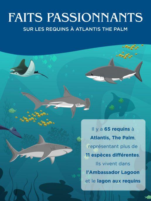 les especes de requins a Atlantis The Palm