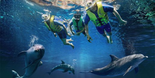 dolphin-snorkel-atlantis-dubai