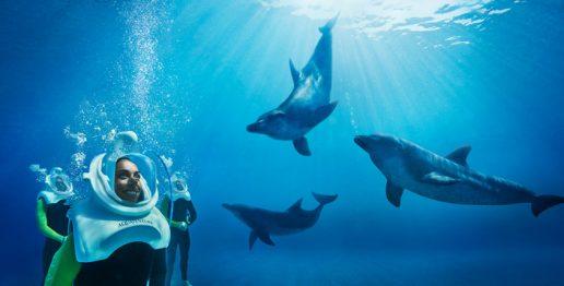 dolphin-trek-atlantis-dubai
