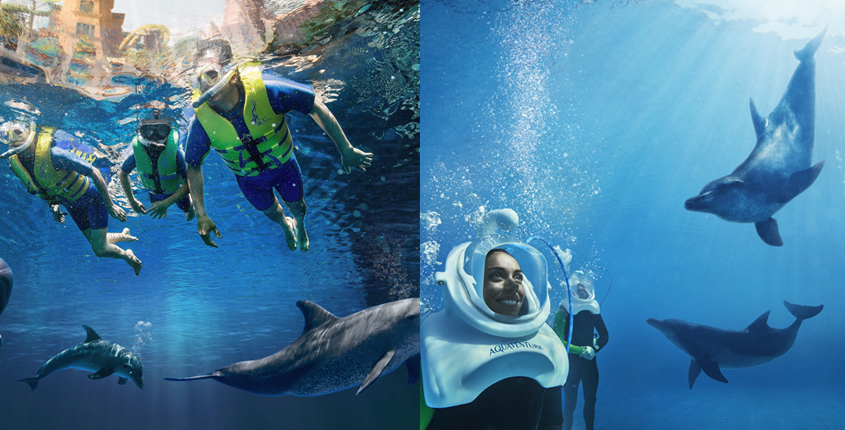 Discover 2 New Dolphin Experiences at Dolphin Bay in Atlantis, The Palm