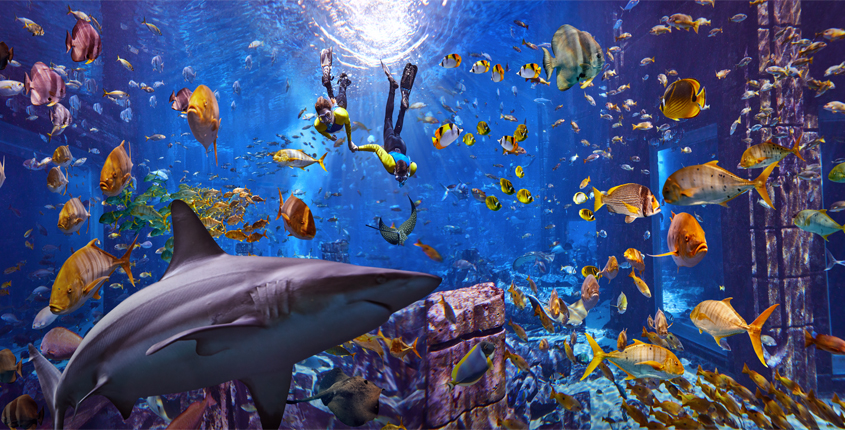 Celebrate World Oceans Day with Atlantis, Dubai