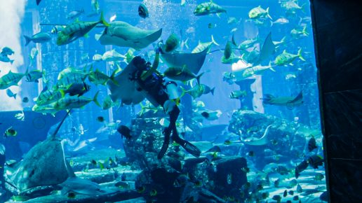 live-feeding-session-atlantis-dubai
