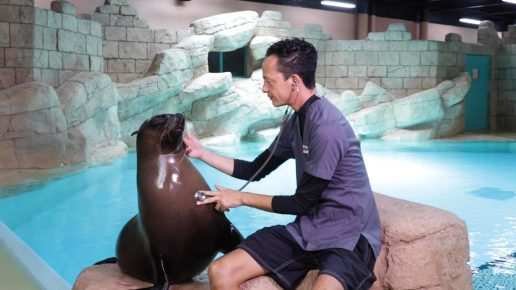 sea-lion-point-marine-education-atlantis-dubai