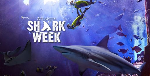 shark-week-celebrations-2020-atlantis-dubai